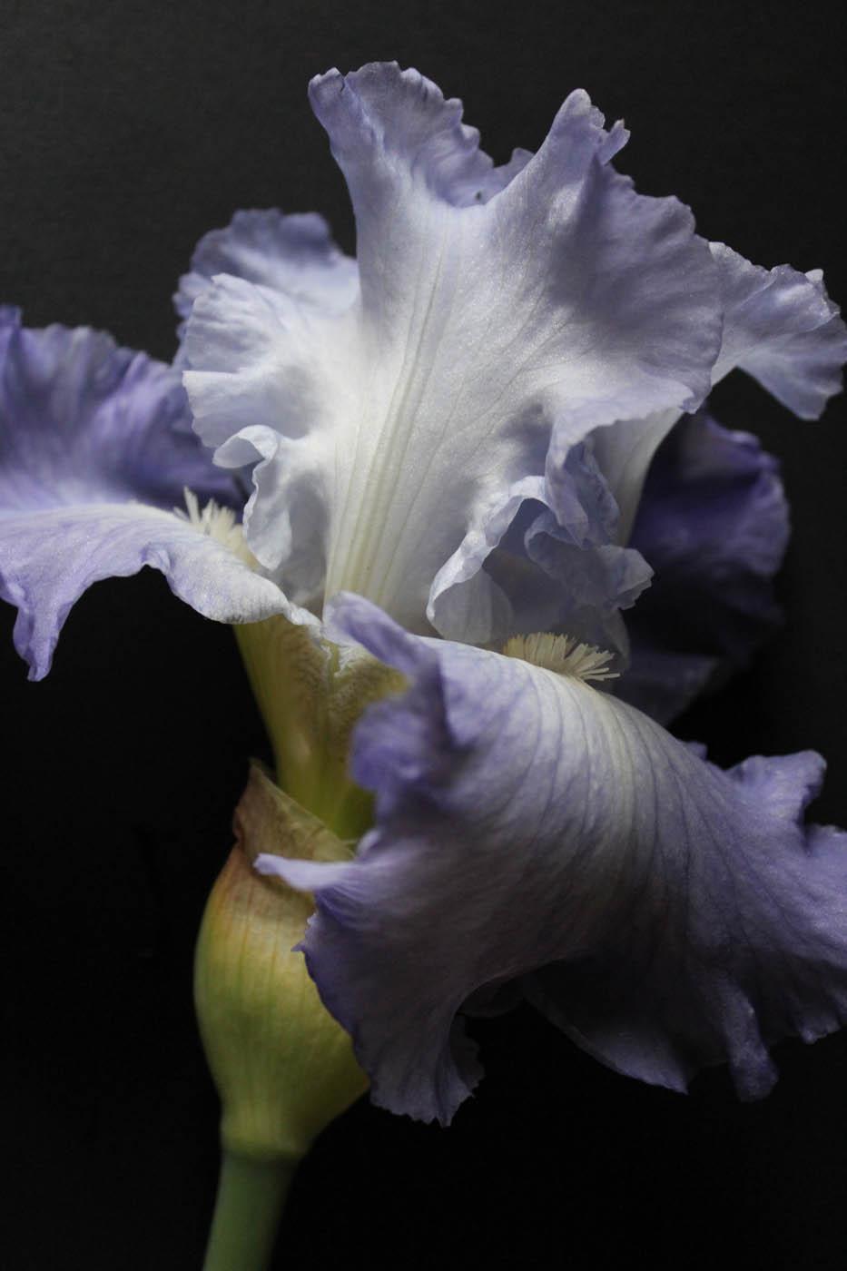 Iris Photo1 16 Mai 11h30